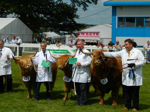 Highland cattle were second in the native breeds show.