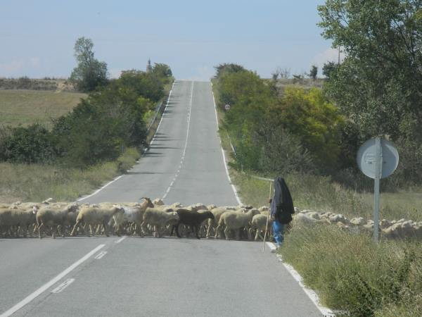 Sometimes we were required to share the road with local farmers.