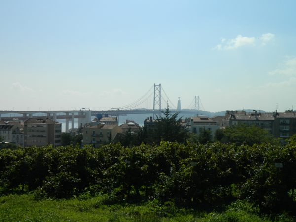 Campus vineyard, notice the campus is located in the heart of Lisbon.